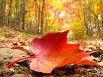Ну, вот и осень пришла!